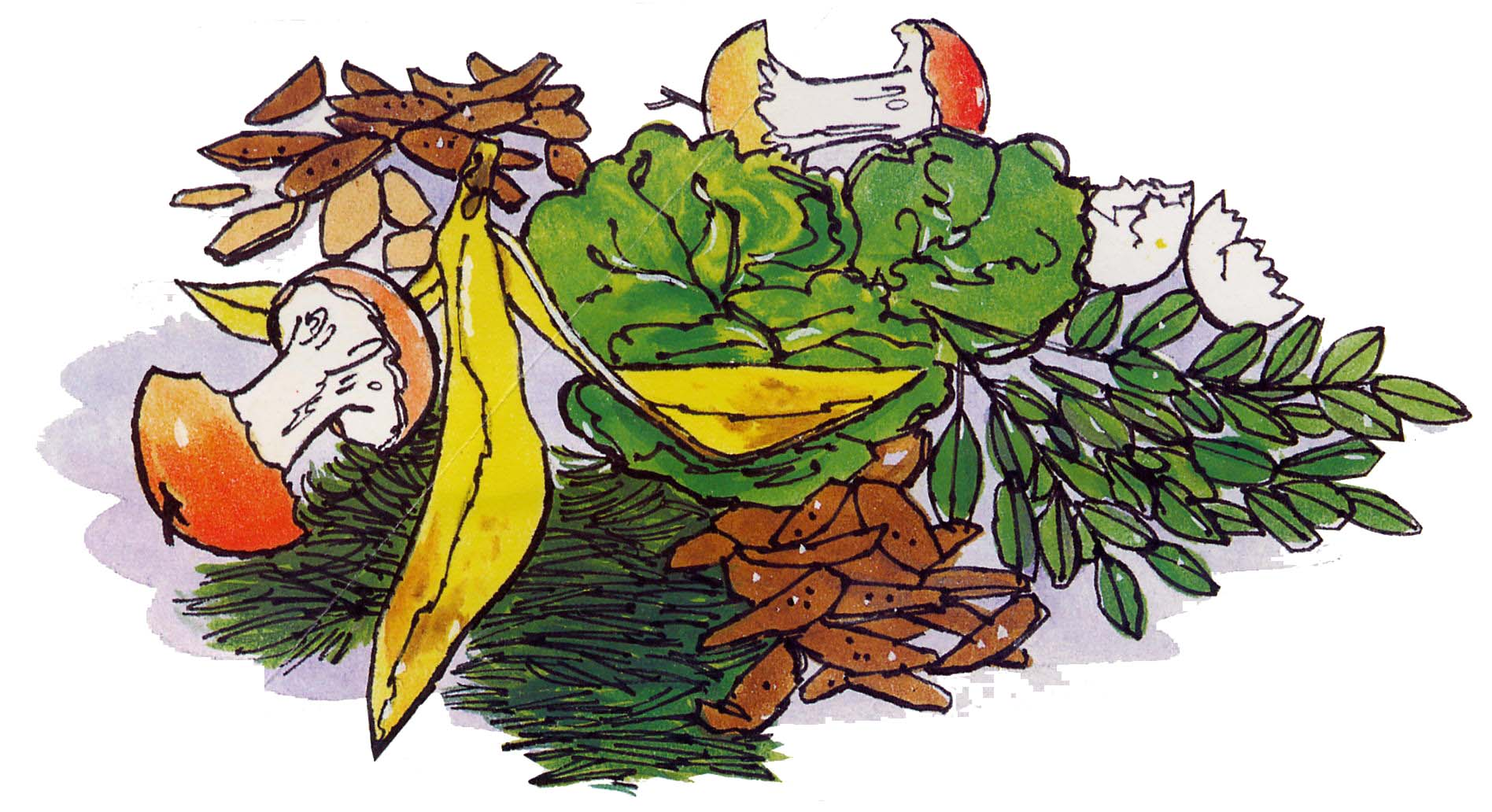 Cartoon Pictures Of Organic Food